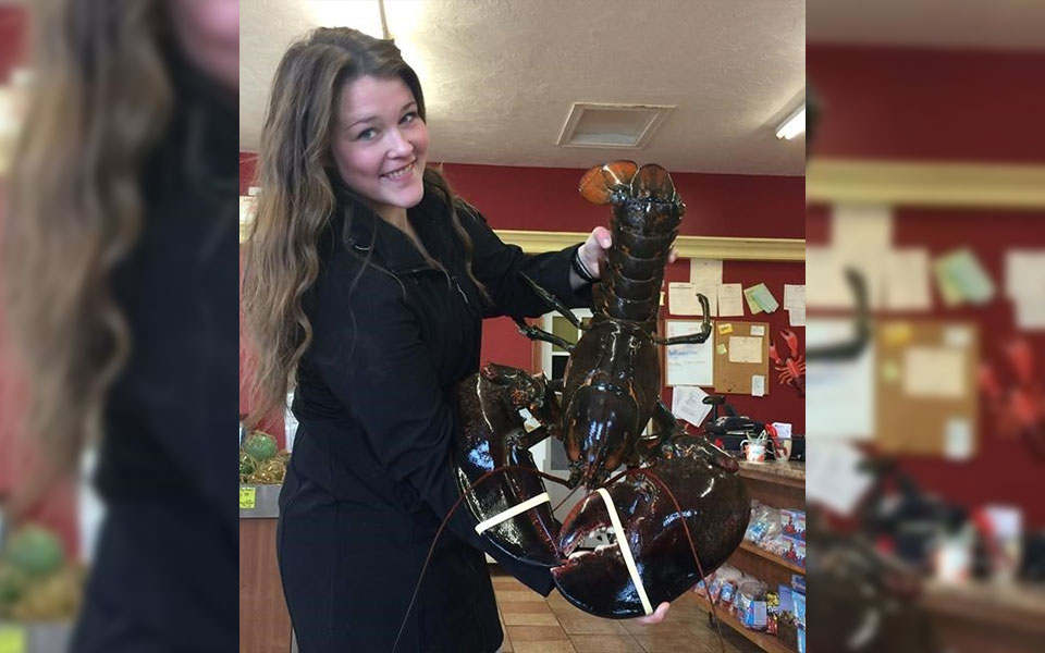 Catherine MacDonald, co-owner of the Alma Lobster Shop in southern New Brunswick, bought the 23-pound crustacean this week from a fisherman in St. Martins, N.B.