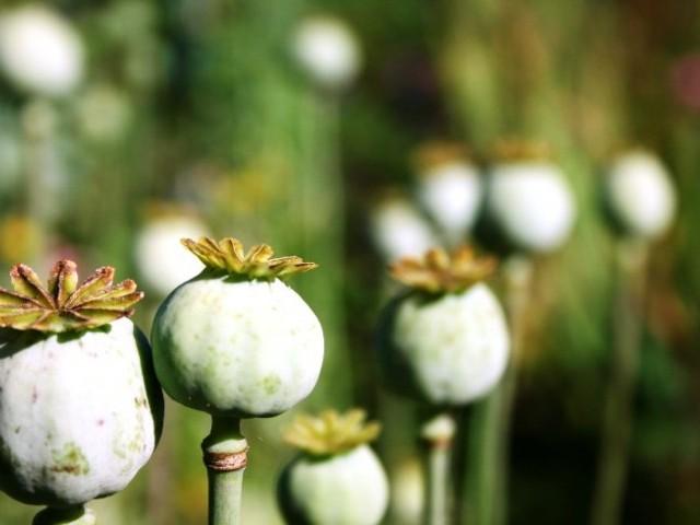 227957-opium-1312922261-841-640x480[1]