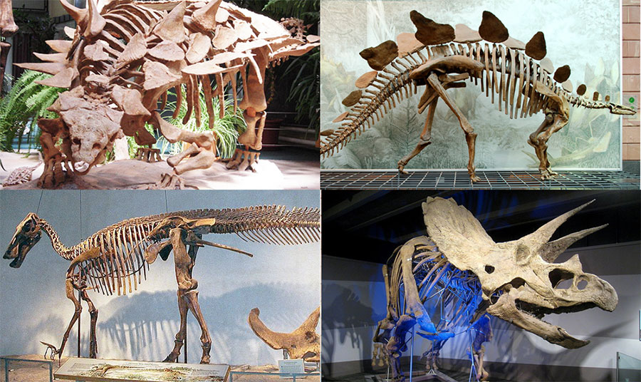 Various_dinosaurs2