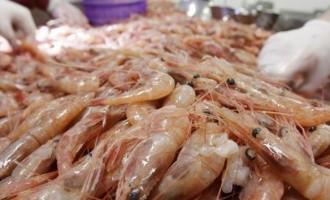 Iran-Seafood