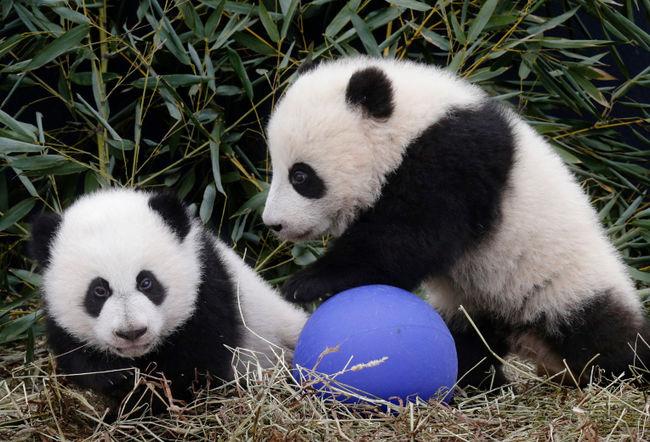 وجود انواع حیوانات و گیاهان نادر و کمیاب در باغ وحش تعجبی ندارد.