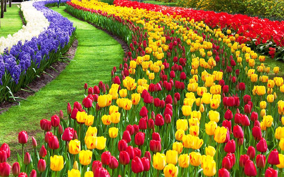 اتاوا ـ فستیوال گل لاله هر سال برگزار می شود و یکی از بزرگترین فستیوالهای گل لاله در جهان است.