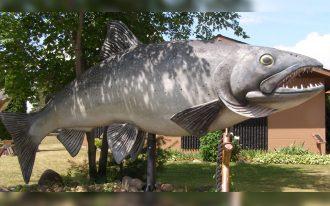 ماهی والدو