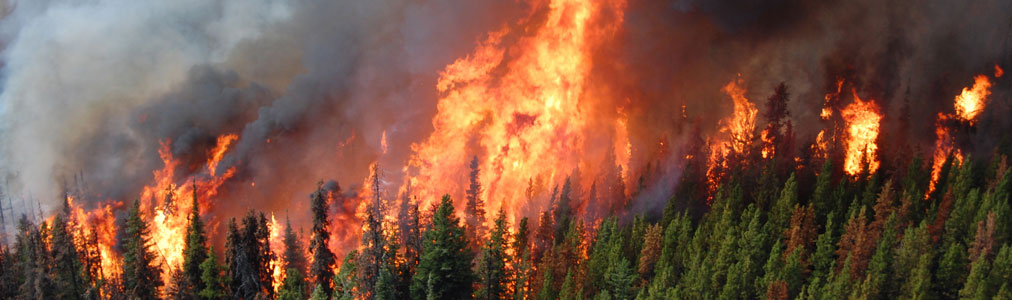 آتش سوزی ها به خطوط انتقال برق آسیب رسانده و هزاران نفر بدون الکتریسیته هستند.