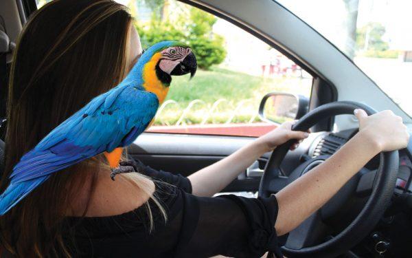 حداقل جریمه ازدحام در صندلی راننده در انتاریو 110 دلار است.