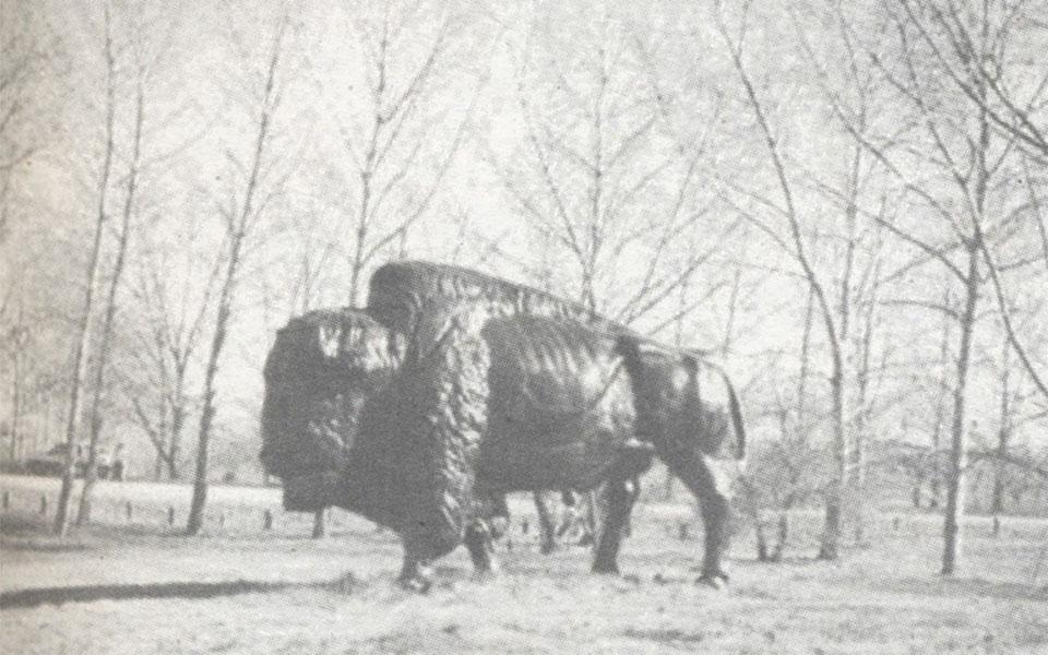 aka-buffalo
