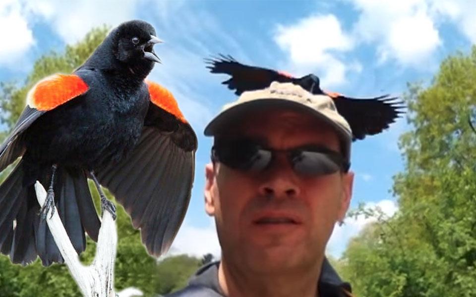 صحنه ای از حمله این پرنده به انسان