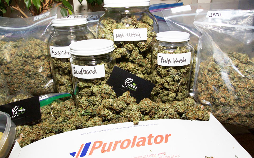 یکی از کمپانی های حمل و تحویل ماری جوانای پستی کمپانی  Purolator است