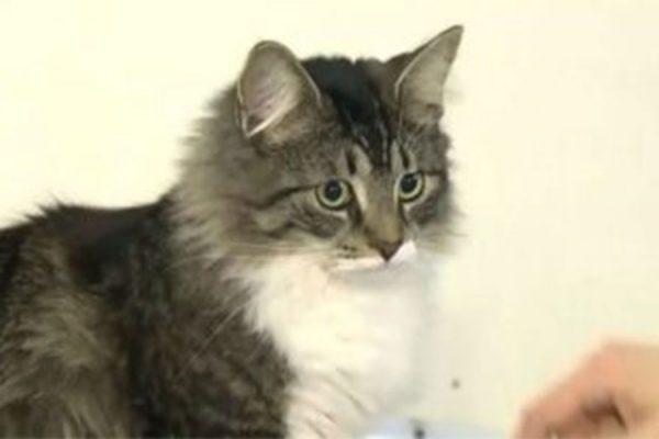 بالو گربه پیدا شده- اسکرین شات از سی تی وی نیوز