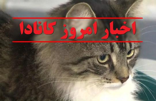 بالو ، گربه خبرساز