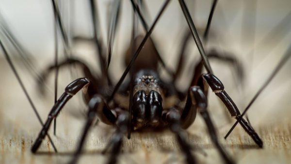 0219_SpiderTour_D (1)