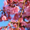نمایشگاه شکوفه ها