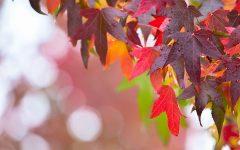 تازه ترین خبرهای تورنتو و کانادا، چهارشنبه شانزدهم اکتبر